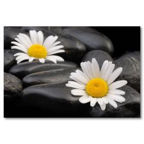 Αφίσα (μαύρο, λευκό, άσπρο, λουλούδια, μαργαρίτες)